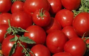 قیمت خرید گوجه فرنگی از کشاورزان منصفانه نیست