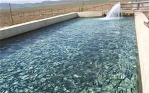 تولید 225تن گوشت ماهی درورامین