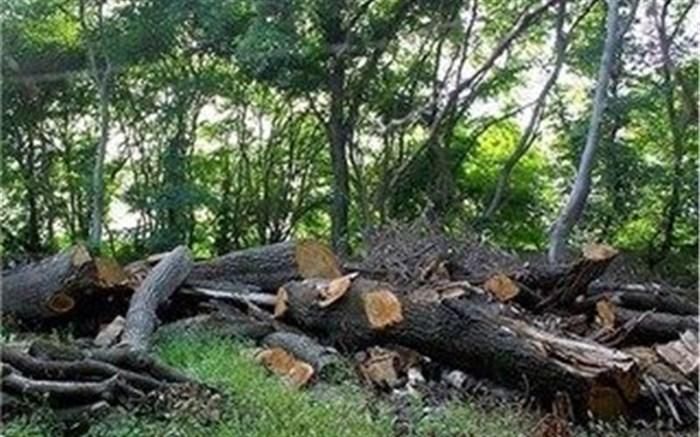 تخریب باغ ۳هزار متری