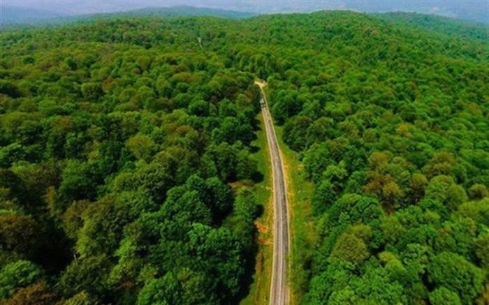 زراعت چوب از جنگلهای هیرکانی محافظت میکند
