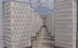 """استفاده از سیستم جدید گلخانه ای""""هواکشت"""" با فناوری ایروپونیک در البرز"""