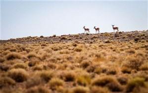 خبر تلف شدن 300 گونه جانوری نادر در لارستان حقیقت ندارد