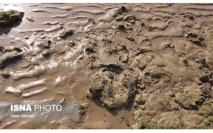 لکه های قهوه ای روی سواحل قشم