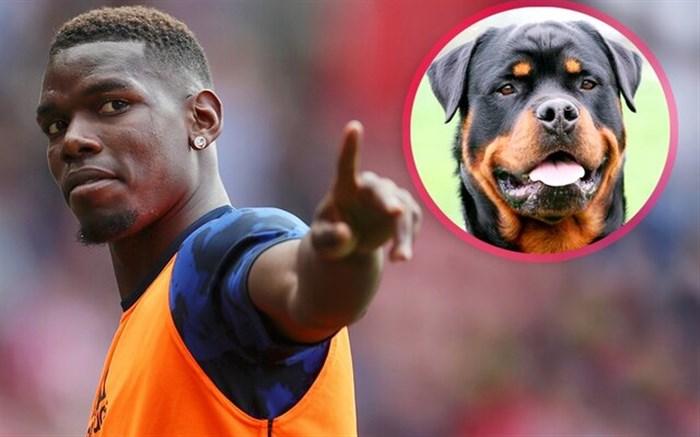 پوگبا و خرید سگ محافظ ۱۵ هزار پوندی!