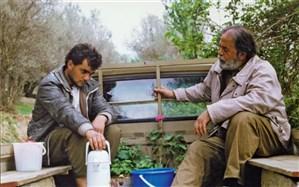 نمایش و نقد فیلم «زیر درختان زیتون» در خانه هنرمندان
