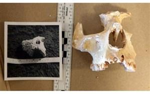 کشف استخوانهای یکی از قدیمیترین ساکنان انگلستان + تصویر