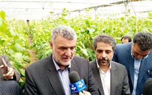 توسعه گلخانهها از اهداف و سیاستهای وزارت جهاد کشاورزی است