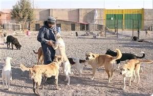 پناهگاه سگهای بلاصاحب تا دو ماه آینده به بهره برداری می رسد
