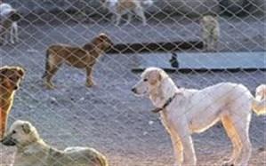 نخستین پناهگاه سگهای ولگرد گیلان در انزلی افتتاح شد