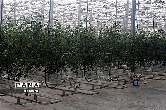 همایش معاونان تولیدات گیاهی و مدیران باغبانی سراسر کشور