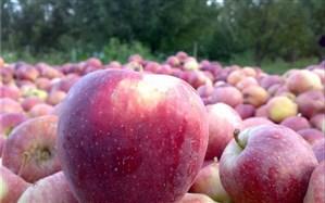 سیب مشگینشهر برای توزیع در شب عید ذخیرهسازی میشود