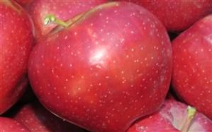 رتبه نخست آذربایجانغربی در تولید سیب کشور