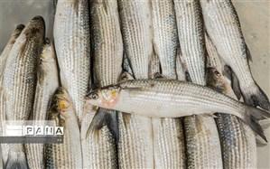 سرانه مصرف ماهی لرستانی ها ۳ کیلوگرم افزایش یافت