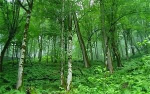 سپیداران گیلان در فهرست آثار طبیعی ملی ثبت شد