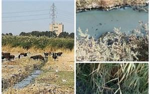تولید محصولات کشاورزی آلوده به عوامل میکروبی و شیمیایی