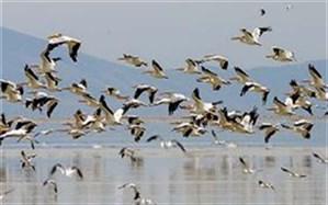 اعزام تیم محیط زیست به میانکاله در پی مرگ ۲۰۰۰ پرنده مهاجر