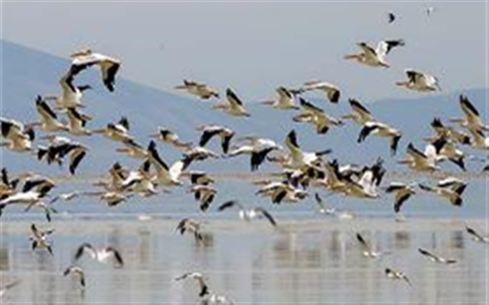 هزاران پرنده مهاجر در اکوسیستمها و تالابهای گیلان فرود آمدند