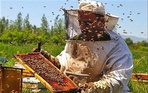 ۶۸۱ نفر زنبوردار در استان سمنان فعال هستند