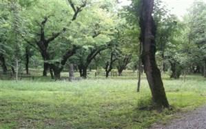 مدیریت پارک جنگلی کار شهرداری نیست