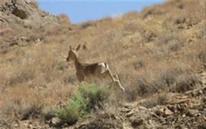 3 متخلف شکار و صید در منطقه حفاظت شده قمصر و برزک کاشان دستگیر شدند
