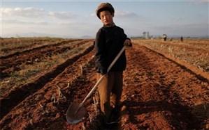 سازمان ملل: نصف مردم کره شمالی سوء تغذیه دارند