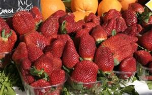 سالانه بیش از ۹۰۰تن توتفرنگی گلخانهای در گیلان  تولید میشود