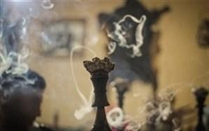 تولید زیرزمینی تنباکو با فضولات حیوانی