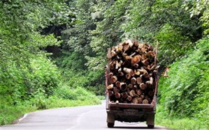 ۷۵ درصد از جنگلهای ایران به بخش خصوصی واگذار شده است