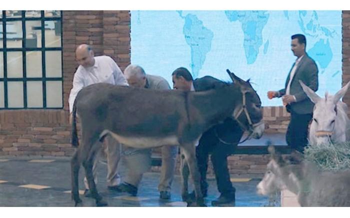 دوشیدن شیر الاغ در برنامه تلویزیونی!