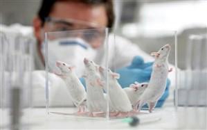 سوزاندن لاشه حیوانات آزمایشگاهی بهداشتیتر از دفن آنهاست