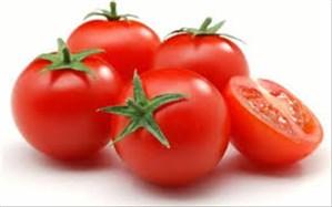 مدیر جهاد کشاورزی شهرستان فنوج: برداشت گوجه خارج از فصل در این شهرستان شروع شد