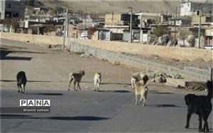 جزییات جدید از حمله سگها به کودک ۷ ساله