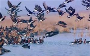 قصرشیرین و سرپلذهاب، فرودگاه اصلی پرندگان مهاجر کرمانشاه