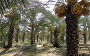 پنج هزار درخت در استان یزد برای محرومان پلاکگذاری شده است