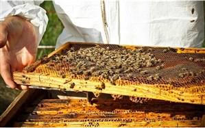 رشد ۵۰ تنی تولید عسل در شاهین دژ طی سال جاری