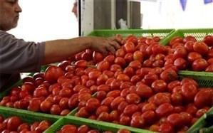 روند صعودی قیمت گوجه