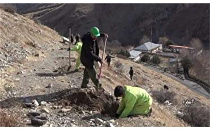 طرح نهال کاری در اراضی شهر آسارا اجرای شد