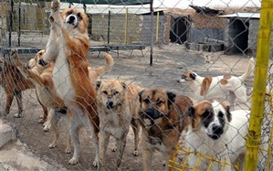 احداث پناهگاه حیوانات بلاصاحب در یزد
