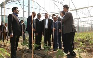 افتتاح 3 طرح بزرگ کشاورزی در استان بوشهر با حضور معاون اول رئیس جمهور