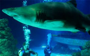 زنگ خطر برای آبزیان: اکسیژن اقیانوسها کم شده است+ویدئو