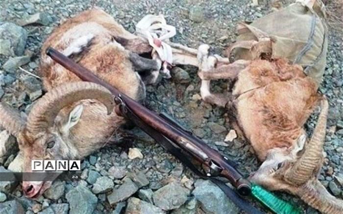دستگیری شکار چیان