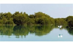 مواد نفتی جان جنگلهای «حرا» را میگیرد