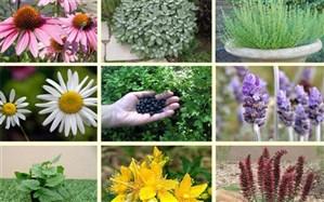 اختصاص تسهیلات برای کشت گیاهان دارویی در یزد