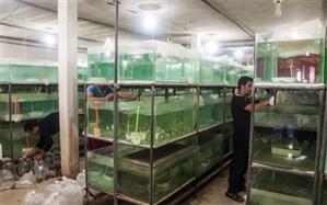 اولین مرکز پرورش و تکثیر ماهیان زینتی درشهرستان ساوجبلاغ به بهره برداری رسید