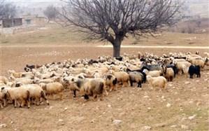 بافق قطب دامپروری استان یزد محسوب می شود