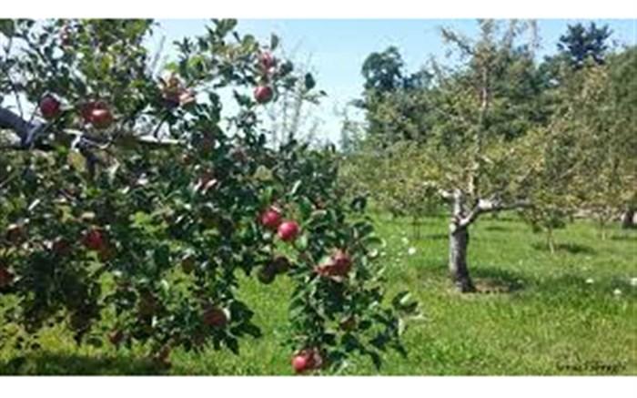 باغ سیب کرج