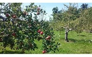 تخریب باغ سیب خط قرمز مجموعه مدیریت شهری است