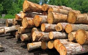 کشف ۲۰ تن چوب جنگلی قاچاق در لنگرود