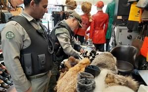 کشف و ضبط محصولات ساخته شده از پوست حیوانات وحشی در تهران + تصاویر
