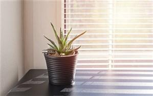 کاهش فشار کار با نگهداری گیاهان کوچک در محل کار